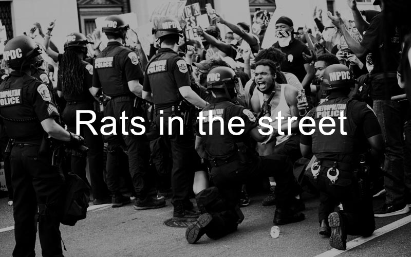 Rats in the street text in center-1